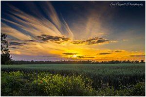 Poringland field and sunset